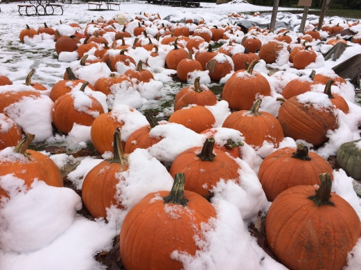 Pumpkins in snow